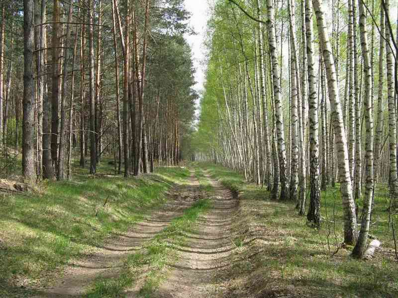Зеленоград администратор выходного дня